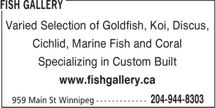 Fish Gallery (204-944-8303) - Display Ad - Varied Selection of Goldfish, Koi, Discus, Cichlid, Marine Fish and Coral Specializing in Custom Built www.fishgallery.ca