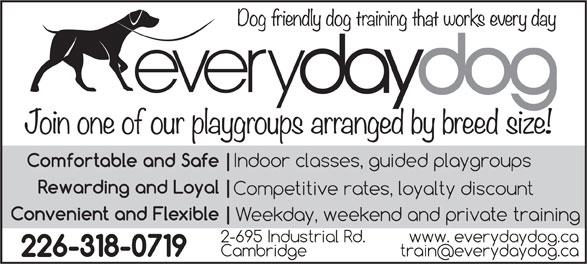 Everyday Dog (519-620-8176) - Display Ad -