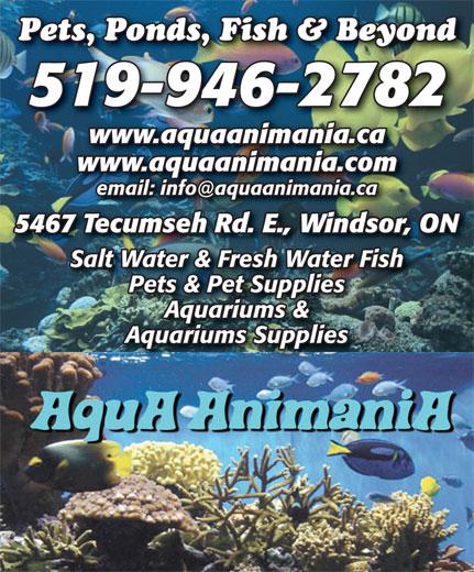AquA AnimaniA (519-946-2782) - Display Ad - 519-946-2782 www.aquaanimania.ca www.aquaanimania.com 5467 Tecumseh Rd. E., Windsor, ON Salt Water & Fresh Water Fish Pets & Pet Supplies Aquariums & Aquariums Supplies