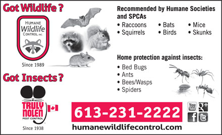 Humane Wildlife Control Inc (613-231-2222) - Annonce illustrée - Recommended by Humane Societies and SPCAs Raccoons Bats Mice Squirrels Birds Skunks Home protection against insects: Since 1989 Bed Bugs Ants Bees/Wasps Spiders 613-231-2222 Since 1938