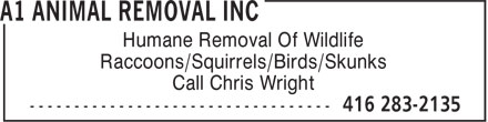 A1 Animal Removal Inc (416-283-2135) - Annonce illustrée - Humane Removal Of Wildlife Raccoons/Squirrels/Birds/Skunks Call Chris Wright  Humane Removal Of Wildlife Raccoons/Squirrels/Birds/Skunks Call Chris Wright